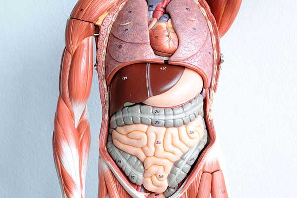 course-anatomy-physiology